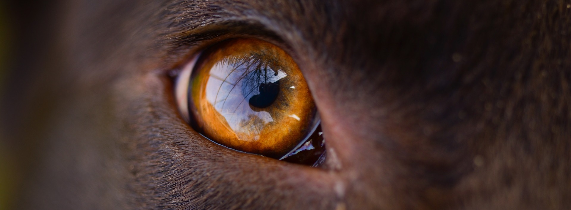 Makroaufnahme eines Hundeauges