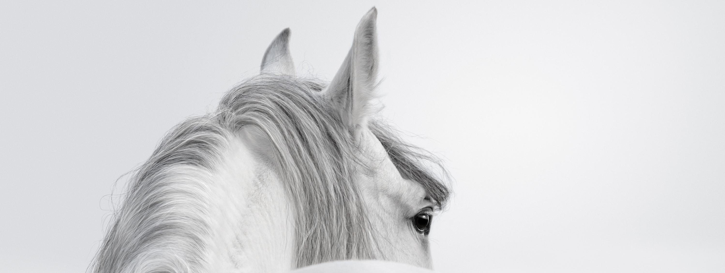 Ohrenpflege-beim-Pferd
