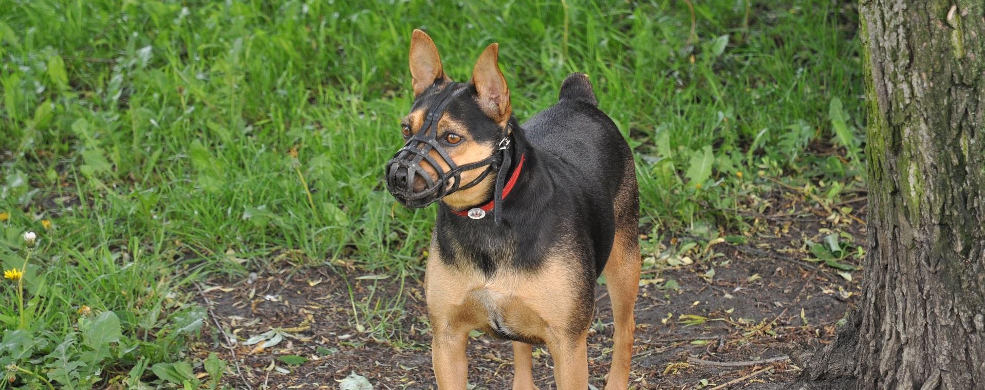Ein Hund mit Maulkorb