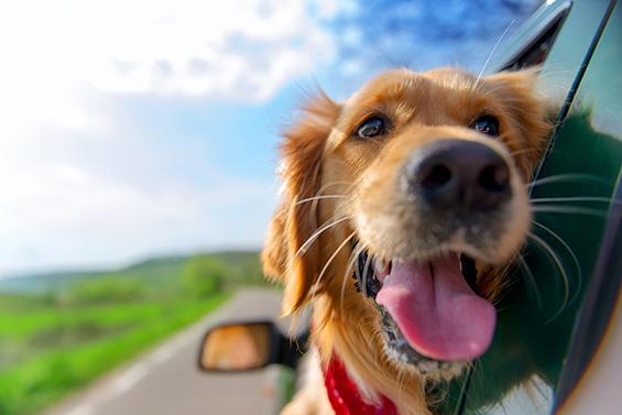 Reisen-mit-Hund1gZKd2RqU3nOi