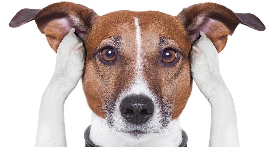 Ohrenpflege-Hund-und-Katze-klein